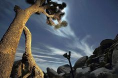 La Times article - things to do near Joshua Tree