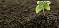 Better #Fertilizers make a more serious contribution in Growth of The #crop. visit http://qlook.bz and find out The Nearest fertilizer supplier.