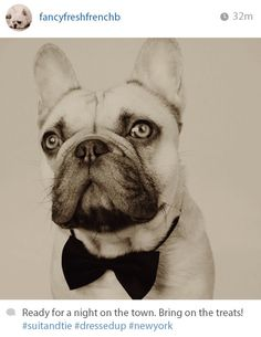 The Cute Guy You Follow But Don't Actually Know IRL | 13 Dogs That Are More Fashionable Than You