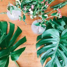 E se você pudesse deixar um espaço da sua casa mais verde? No Pinterest você encontra a planta perfeita para cada ambiente da sua casa.