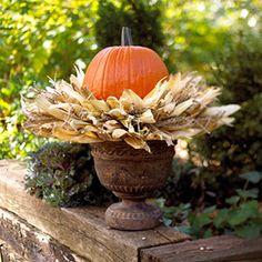 Pumpkins nestled into husks. Must do.