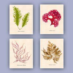 Inspired by my original seaweed pressings,Seaweed art Sea fan art Nautical wall art Pressed by AlgaNet, $64.00
