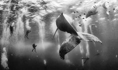 A CHANCE encounter with a humpback whale and her calf has beat over 17,000 other entries to win the National Geographic travel photo of the year.