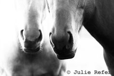 Horse Photography Black and White Horse Art Print by jrefer, $29.00