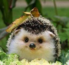 A Little smiling hedgehog <3