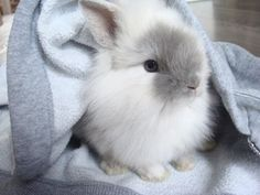 Bunny rabbit (: -my Charlotte would do this