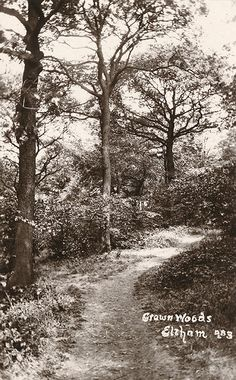 Crown woods, Eltham, 1932