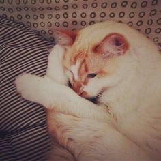 #cats #catstagram #loveforcats #gatinhos #pets #Babycat #gatinho #purodesign #amogatos #catlover  #euamogatos #animallover #gatocomestilo #gatoSustentável