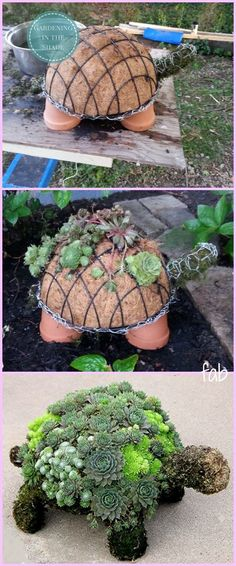 Diy succulent turtle tutorial video how to make bottle cap flowers for frugal diy garden art Succulents Garden, Planting Flowers, Succulent Planters, Succulent Garden Ideas, Flower Gardening, Hanging Planters, Garden Planters, Succulent Containers, Succulent Gardening