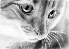 Rysunek pyszczka kota, wykonany ołówkiem