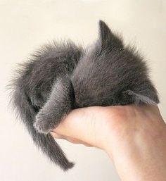 So tiny...in a Big, Big, Big World. Send me plenty of Love. I love kittens. #MoveonwithME