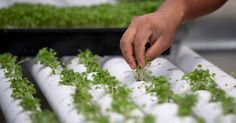 London Turns World War II Shelters into Underground Farms