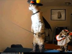Google Image Result for http://flurrious.files.wordpress.com/2012/01/pussinboots1.gif