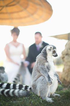 Lemurs at Tanganyika Wildlife Park twpark.com