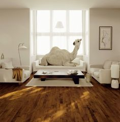 camel in house - EDF advertising