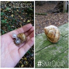 My first snail cache! Geocaching Containers, Metal Tools, Snail, Cleaning Hacks, Inventions, Den Building, Survival, Geek Stuff, Escape Room