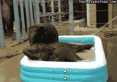 Happy baby elephants…