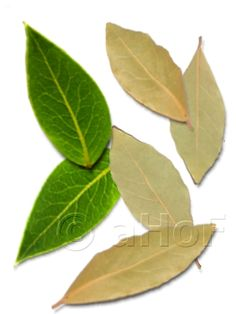 Bay leaves, fresh and dried. If one is lucky enough to have a bay laurel tree, the leaves are easily used fresh or dried. They are key ingredients in spice mixtures such as the French bouquet garni, and some garam masala mixtures. The leaves are very stiff with a strong vein and stem.