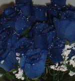 84 Silk Rose Flowers w/Raindrops - Wedding Flowers - Bridal/Floral - Royal Blue