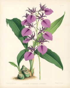 Warner Orchid Album Antique Prints 1882