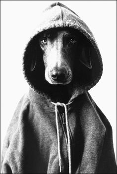 a dog in the hood