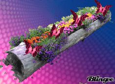 flores Moving Pictures Gif, Cool Pictures, Beautiful Pictures, Beautiful Gif, Roses Gif, Flowers Gif, Beautiful Flowers Wallpapers, Beautiful Butterflies, Butterfly Gif