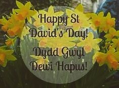 #dyddgwyldewihapus #anglesey #ynysmôn Saint David's Day, Anglesey, March 1st, Patron Saints, Daffodils, Wales, Places To Travel, St David, Tea Cups