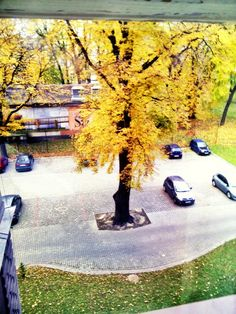Autumn in Tarnów, 2nd high school, Poland, tree