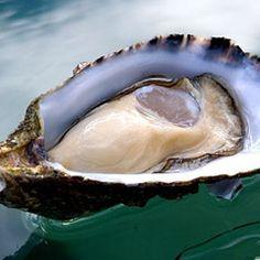 South Coast/Jervis Bay & Shoalhaven/Food and Wine