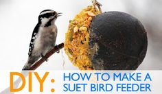 Diy: How To Make Suet Winter Bird Feeders