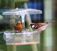 Window feeders are a great way to get up close and personal with wild birds. Robins and Sparrows are regular visitors to our feeder for tasty mealworms.