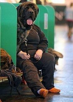 Dog or human ?