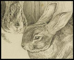 Two Bunnies (detail) by peacay, via Flickr