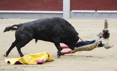 Mora was pierced through his femoral artery by the bull, and needed immediate emergency surgery, Funny because he planned on killing the Bull.