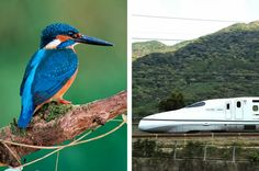 Bullet train designed after a Kingfisher