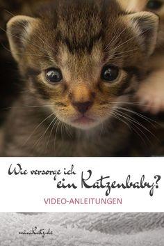 Hilfreiche Video-Anleitungen zur Pflege von Katzenbabys - Eine Babykatze ohne Mutter ist auf menschliche Hilfe angewiesen. Hier sind ein paar Videos mit Anleitungen zur Pflege von Katzenbabys.