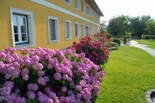 Nejkrásnější statek Hydrangea, Plants, Farm Cottage, Nice Asses, Hydrangeas, Plant, Hydrangea Macrophylla, Planets