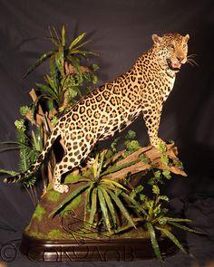 Taxidermy Leopard Jungle Drawing, Taxidermy Display, Wild Ones, African Art, Art Forms, Jaguar, Man Stuff, Drawings, Greenery