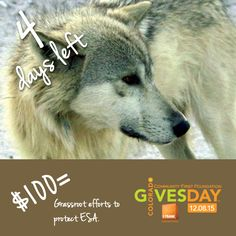 Countdown: 4 more days until #ColoradoGivesDay! Read more or get links to donate or pledge: http://rockymountainwild.org/donate/giving