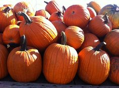 How to grow a pumpkin patch