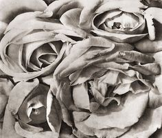 Photo by Tina Modotti - The Roses