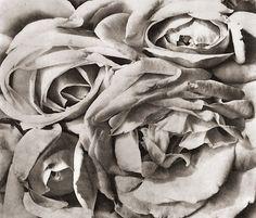 Photo by Tina Modotti - The Roses