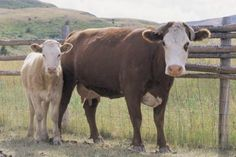 The United States Department of Agriculture (USDA) and the Organic Farming Research Foundation offer grants that can alleviate some of the costs of starting up a cattle farm. Some monies are ...
