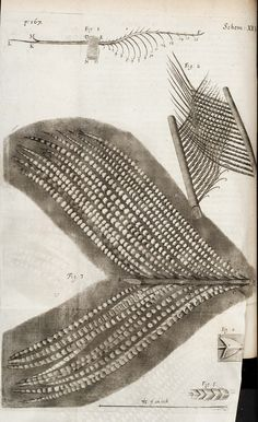 Hooke, Robert, 1635-1703 / Micrographia: or some physiological descriptions of minute bodies made by magnifying glasses : with observations and inquiries thereupon.  Observ. XXXV. Of the contexture and shape of the particles of feathers