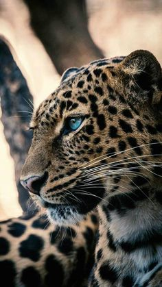 Photo by Uriel Soberanes on Unsplash – Animal Wallpaper And iphone Nature Animals, Animals And Pets, Baby Animals, Cute Animals, Big Cats, Cute Cats, Cats And Kittens, Tier Wallpaper, Animal Wallpaper