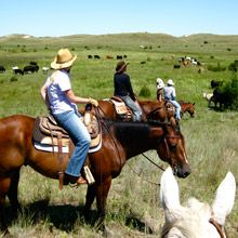 Working with cattle and horses at Rowse's 1+1 Ranch in Nebraska, USA - the ultimate working ranch vacation!