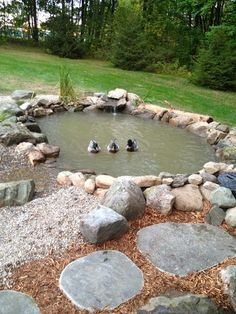 Impressive pond duck pond backyard ducks I have all the free rock o can handle to do this with rock from right off our property