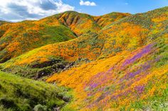 About PANGAIA Best Photographers, Landscape Photographers, Yellow Wildflowers, Orange Poppy, Surrealism Painting, California Poppy, Belleza Natural, Small Towns, Wild Flowers