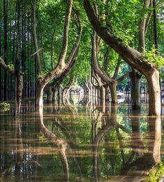 Reflection (Defined) - The Boston Globe