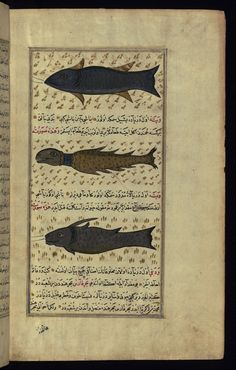 Title: Three types of fish from around Vaynah (Vīnah?) Island Form: Illustration
